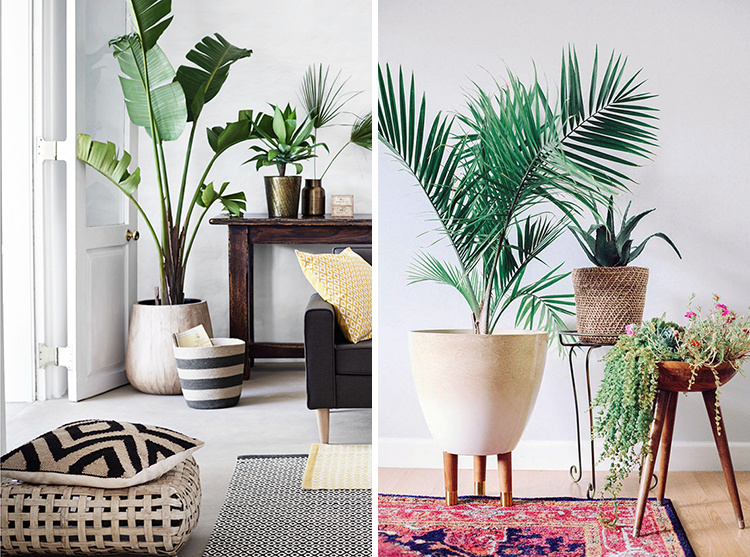 interior-palm-trees-00