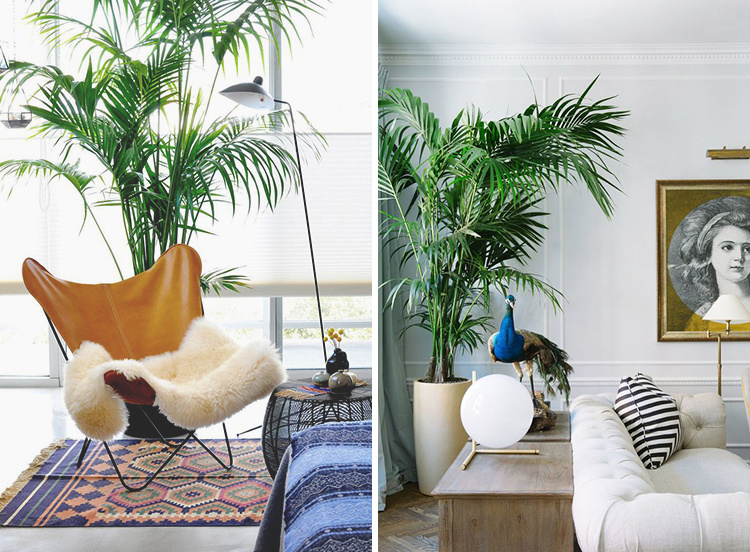 interior-palm-trees-01