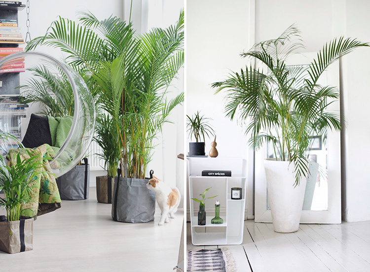 interior-palm-trees-02
